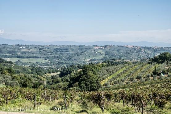 Il Corno, The Vineyard