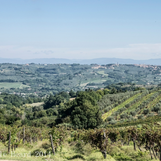 Il Corno, The Vineyard